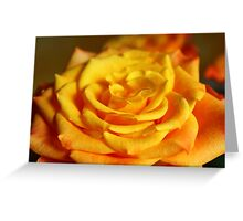 The Language of Roses Greeting Card