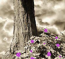 Summer Enchantment by Christine Lake