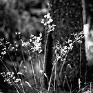 Grasses, Dawyck Gardens, Near Peebles, Scottish Borders by Iain MacLean