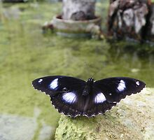 Butterly Over Water by MishaLouise91