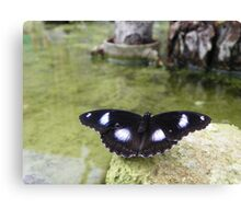 Butterly Over Water Canvas Print