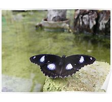 Butterly Over Water Poster