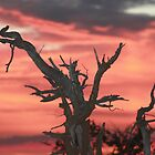 A  magical african sunset at Mashatu by jozi1