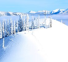Trees on Whitepass by Abby Lewtas