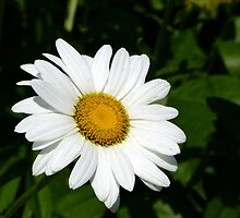 Tread lightly, she is near, under the snow. Speak gently, she can hear the daisies grow. by Scott Mitchell