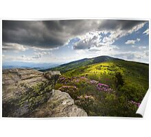 Roan Mountain Rhododendron Bloom - A Glorious Greeting Poster