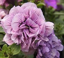 purple double petunia - as~is by Linda  Makiej