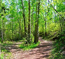 Fork in the trail by Jim Sauchyn