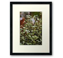 Bolivian Inch Plant Framed Print