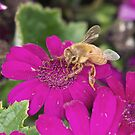 Busy Bee by Anthony Roma