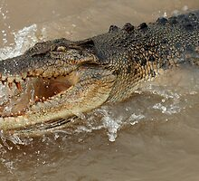 Saltwater Crocodile Ready And Willing by Bob Christopher