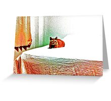 My bed, my TV, my room...for a bossy cat! mow... Greeting Card