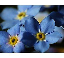 Forget-Me-Nots 7 Photographic Print