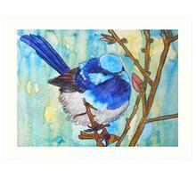Susie's Blue Wrens III Art Print