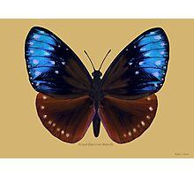 Stripped Blue Crow Butterfly Photographic Print