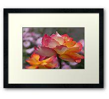 Rose Companions Framed Print