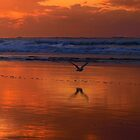 Gull by geophotographic