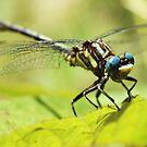 Blue-Eyed Dragon by Seth LaGrange