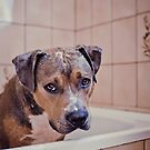 Bathtime blues by ruthlessphotos