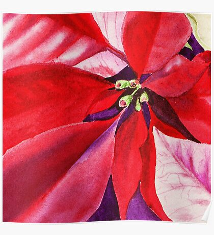 Christmas Red Poinsettia  Poster