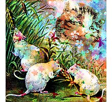 3 BLIND MICE Photographic Print
