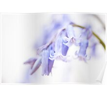 Bluebell Abstract III Poster