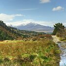 Walks In The Cairngorms...Ryvoan Pass by Jamie  Green