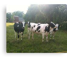 German Cows Canvas Print