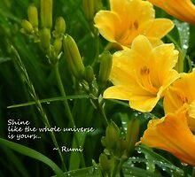 Shine... by LindaR