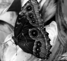 Butterfly 1 by Debbie  Maglothin
