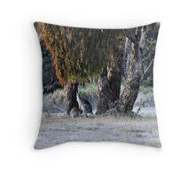 Kangaroos of Hill End NSW Australia Throw Pillow