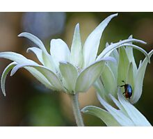 Soft Flannel Flowers Photographic Print