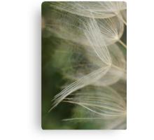 Salsify Seeds Metal Print