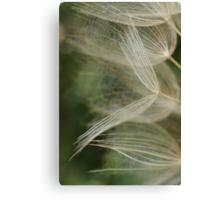Salsify Seeds Canvas Print