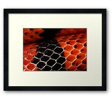 Scutes in red and black Framed Print