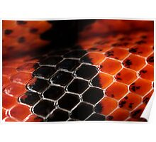 Scutes in red and black Poster