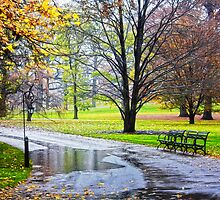 Empty walkway on a beautiful rainy autumn day  by printsforwalls