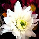 white flower by Amy101