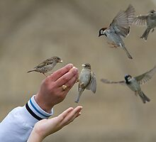 Hand feeding the sparrows near Notre Dame in paris, France by Keith Larby
