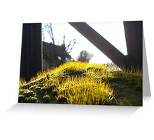 Moss on Metal  Greeting Card