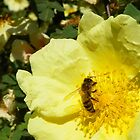 Sweet Sweet Nectar by MishaLouise91