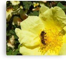 Sweet Sweet Nectar Canvas Print