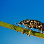 Sand Weevil by CBoyle