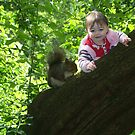 up the tree by Ann Persse