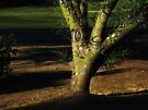 Light on the Tree by Lucinda Walter