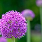 Perfect Purple by ColinKemp