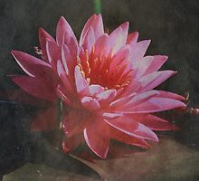 Miss Siam Water Lily with Texture by Robert Armendariz