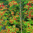 MOUNTAIN ASH by Chuck Wickham