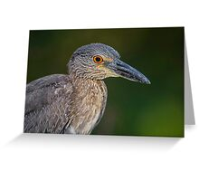 Yellow Crowned Night Heron Portrait Greeting Card
