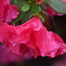 Waterlogged Pink Azalea by TheaShutterbug